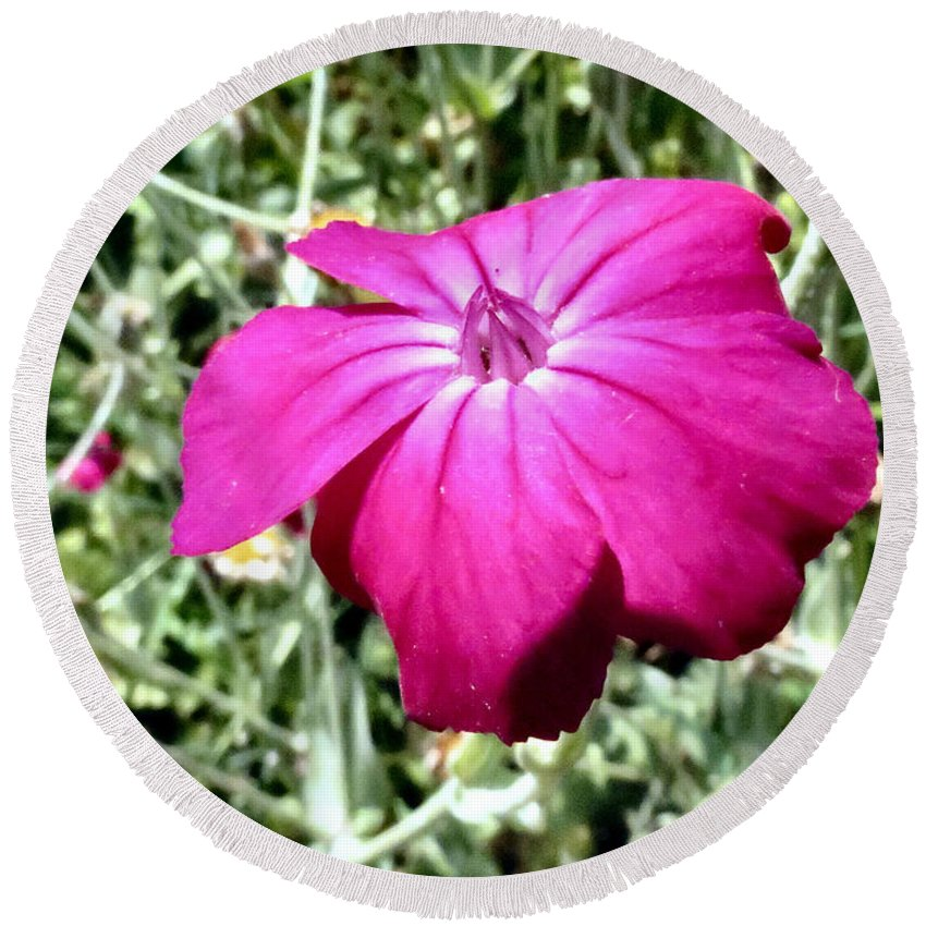 Flower Round Beach Towel featuring the photograph Magenta by Art Dingo