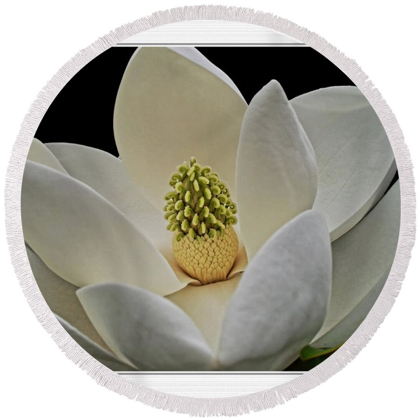 Round Beach Towel featuring the photograph Magnolia I by Debbie Portwood