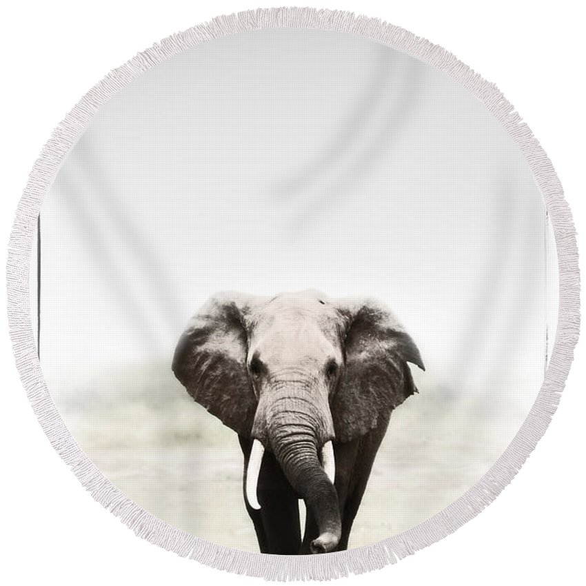 Elephants Round Beach Towel featuring the photograph Majestic Elephant 2 by Jack Daulton