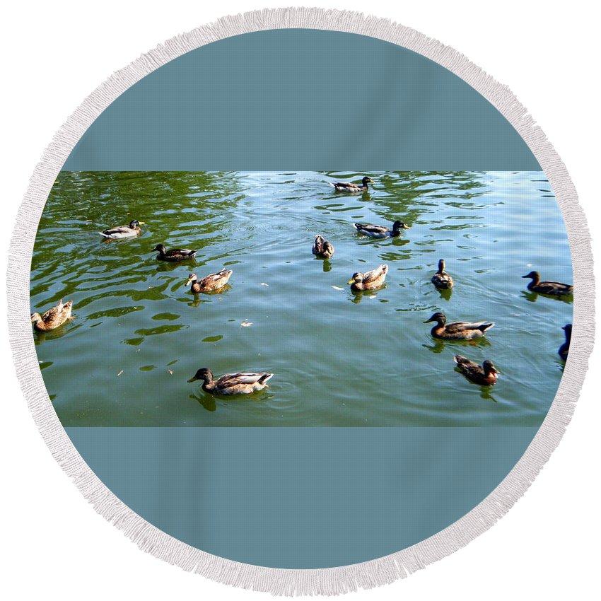 Ducks Round Beach Towel featuring the photograph Mallard Ducks by April Patterson