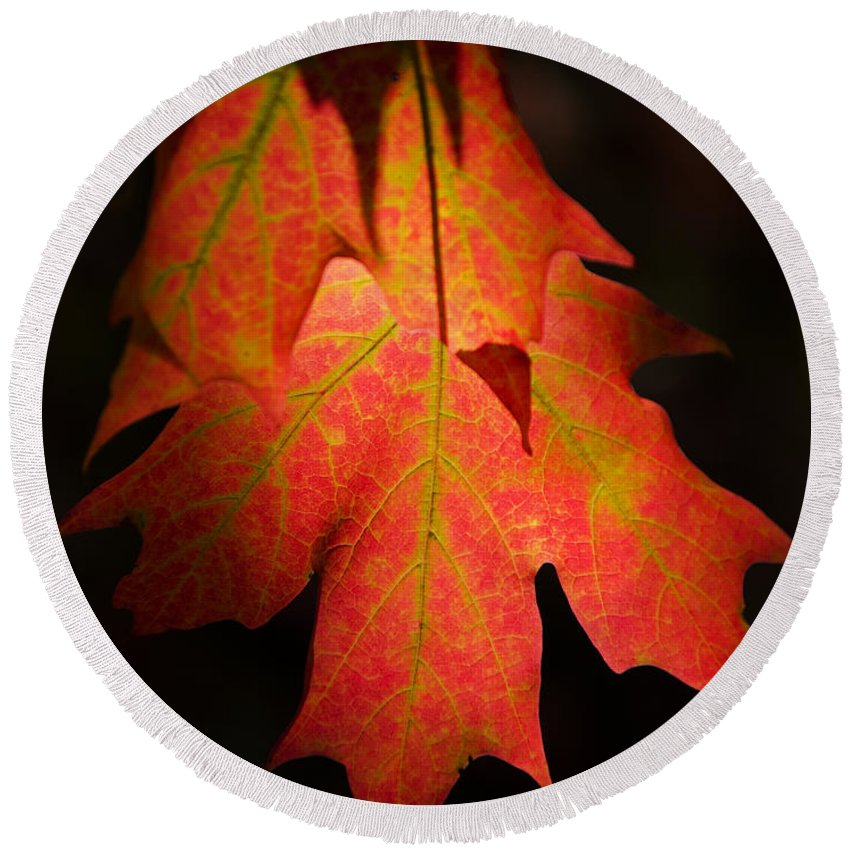 Leaves Round Beach Towel featuring the photograph Maple Leaves by Jeff Galbraith