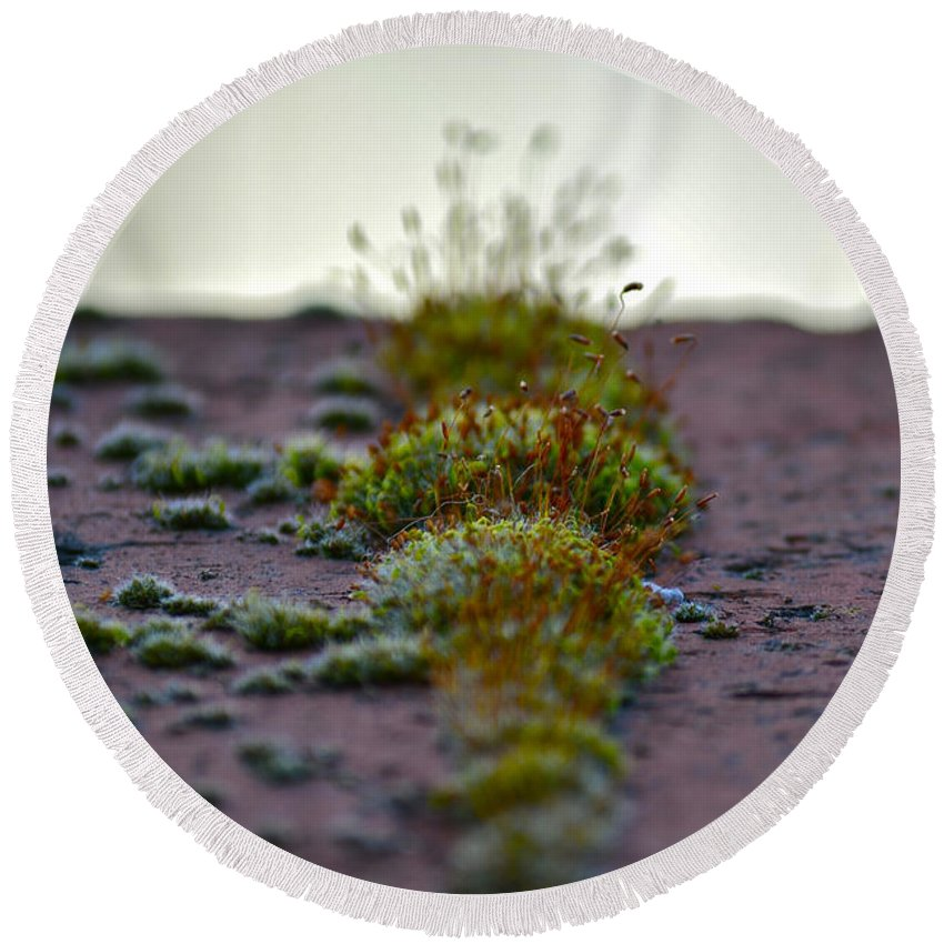 Macro Photography Round Beach Towel featuring the photograph Martian Landscape by Bill Owen