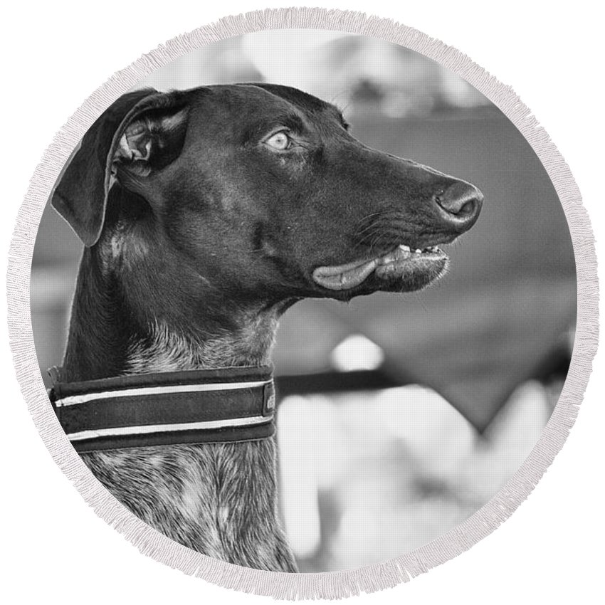 Dog Round Beach Towel featuring the photograph Mesmerized by Eunice Gibb