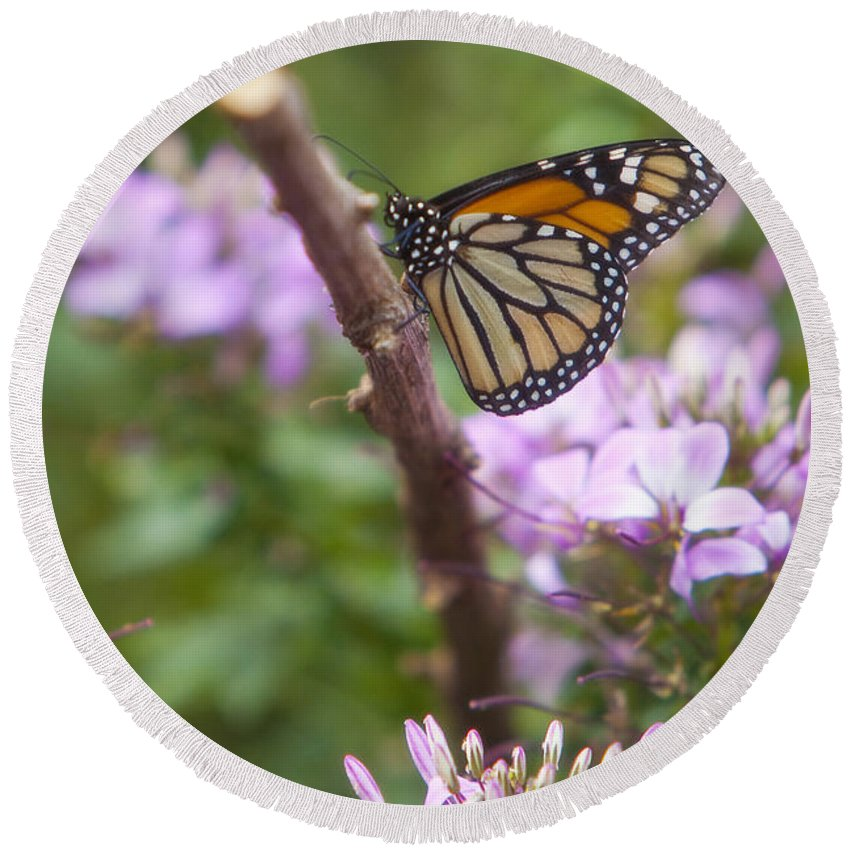 Butterfly Round Beach Towel featuring the photograph Monarch Butterfly by Amy Jackson