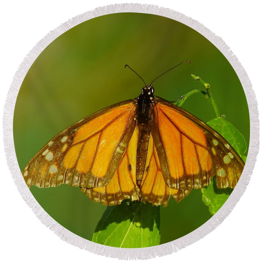 Butterfly Round Beach Towel featuring the photograph Monarch On Hackberry by Robert Frederick