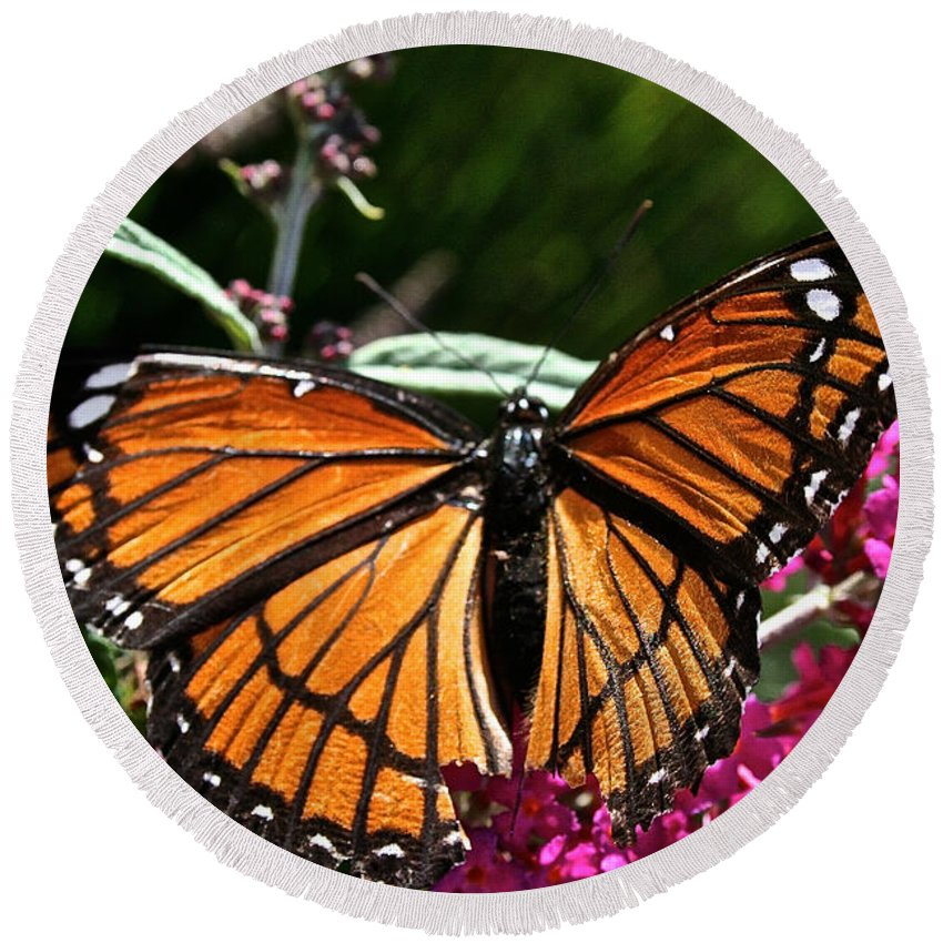 Outdoors Round Beach Towel featuring the photograph Monarch by Susan Herber