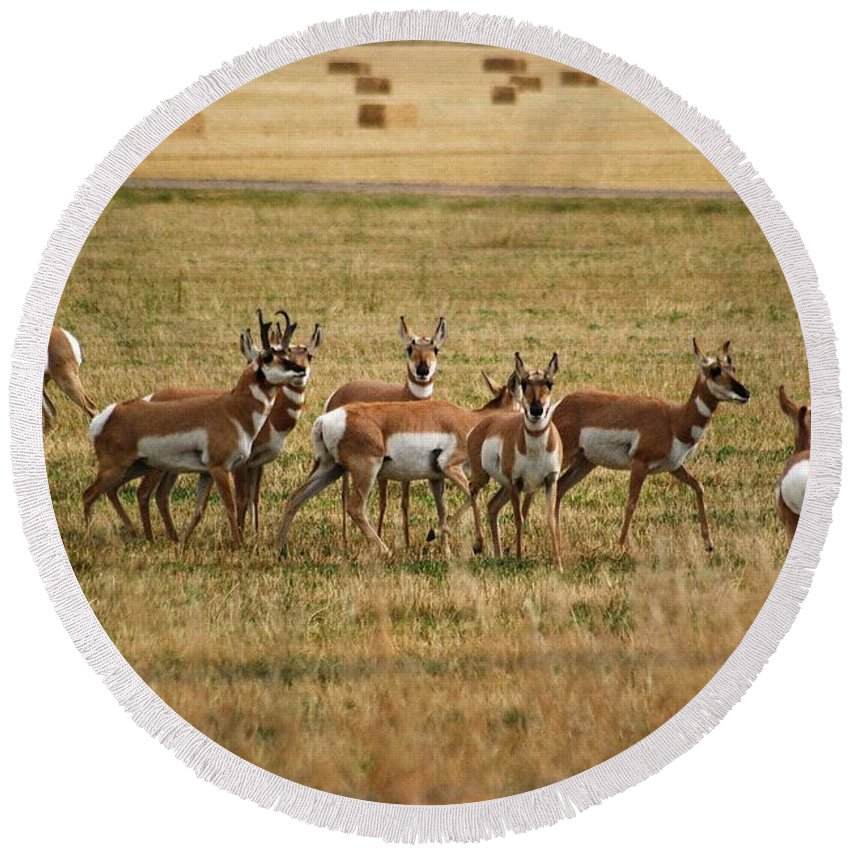 Antelope Round Beach Towel featuring the photograph Montana Antalope 9396 by Michael Peychich