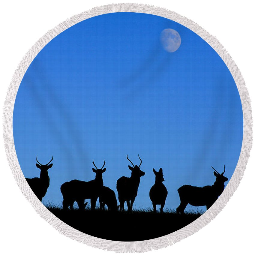 Elk Round Beach Towel featuring the photograph Moonlighting by Alyce Taylor