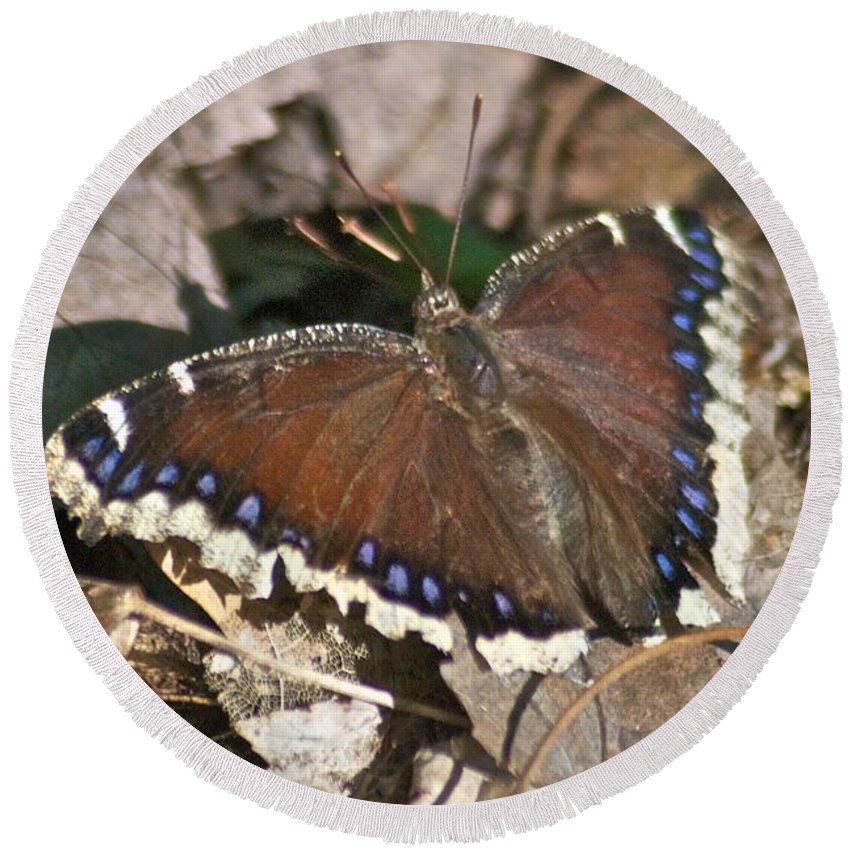 Butterflies Round Beach Towel featuring the photograph Morning Cloak 7580 by Michael Peychich
