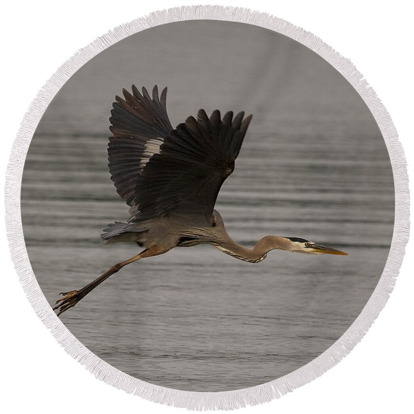 Heron Round Beach Towel featuring the photograph Morning Flight by Eunice Gibb