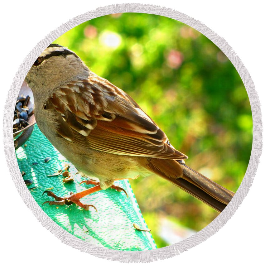Nature Round Beach Towel featuring the photograph Morning Sparrow II by Debbie Portwood