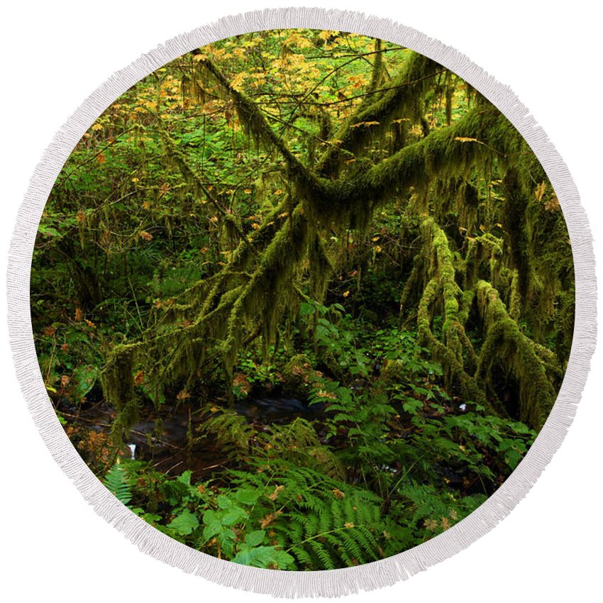 Silver Falls State Park Round Beach Towel featuring the photograph Moss In The Rainforest by Adam Jewell