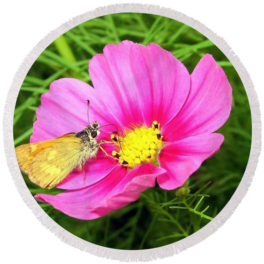 Moth Round Beach Towel featuring the photograph Moth On A Cosmos by Will Borden