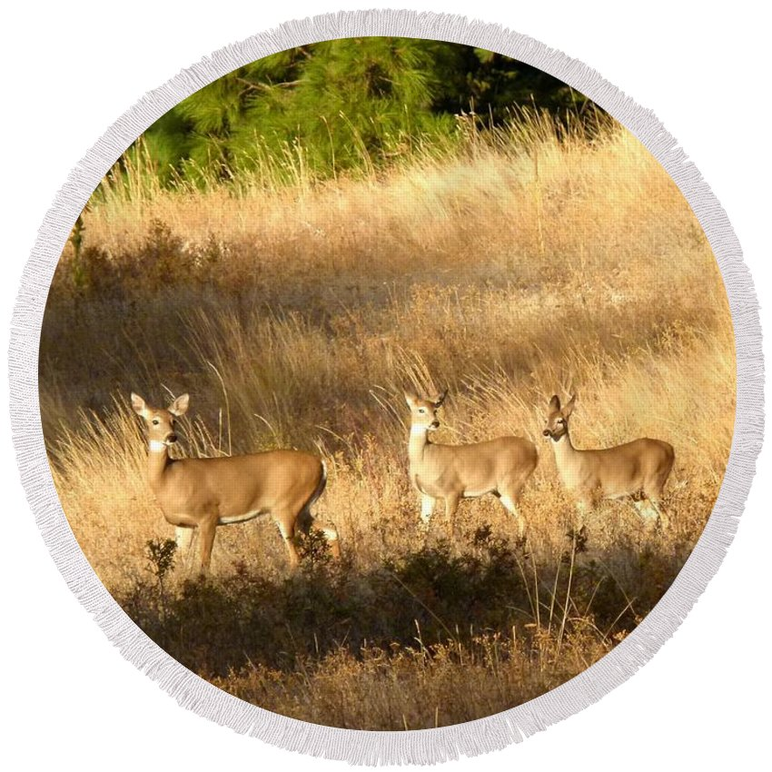 Deer Round Beach Towel featuring the photograph Mother And Twins by Will Borden