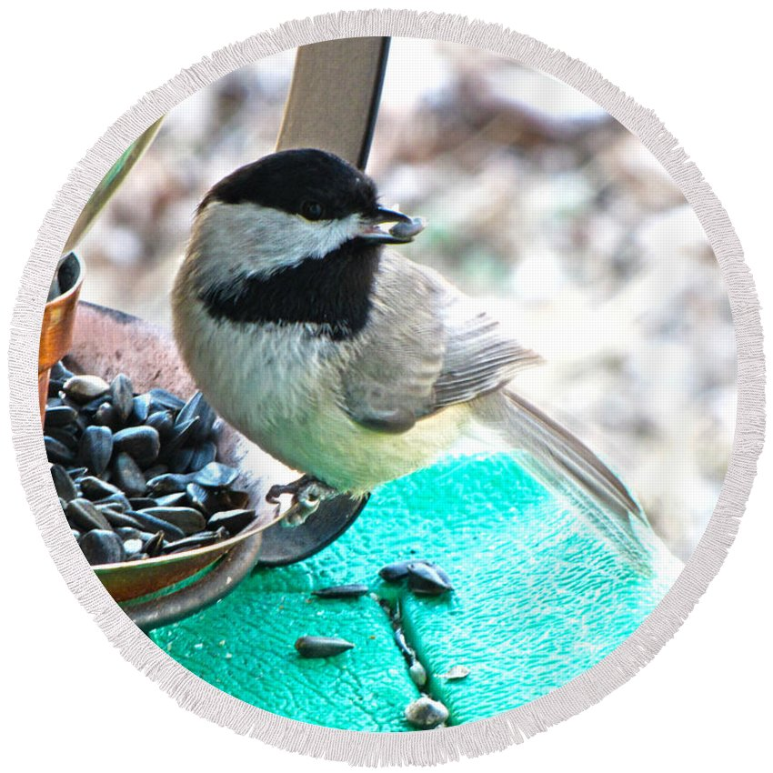 Nature Round Beach Towel featuring the photograph Mouth Full Chickadee by Debbie Portwood