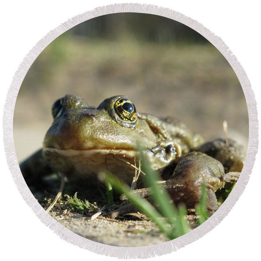 Frog Round Beach Towel featuring the photograph Mr. Charming Eyes by Ausra Huntington nee Paulauskaite