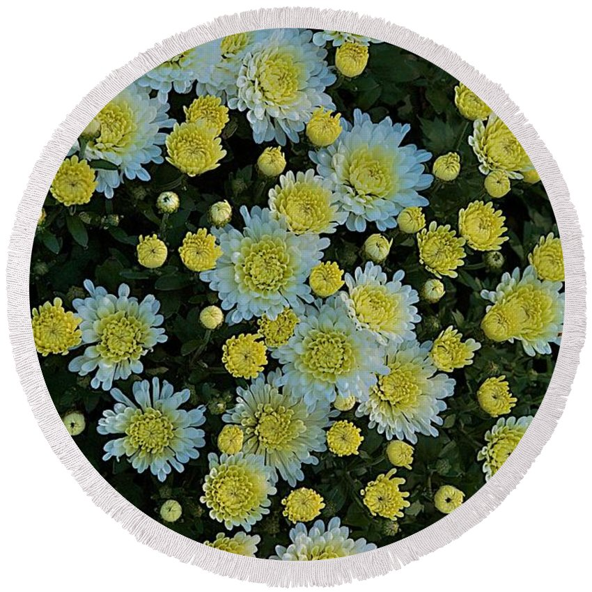 Flower Round Beach Towel featuring the photograph Mums by Joseph Yarbrough