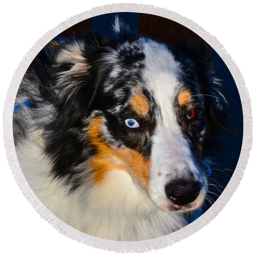 Dog Photographs Round Beach Towel featuring the photograph My Brown Eyes Blue 2 by Bill Owen