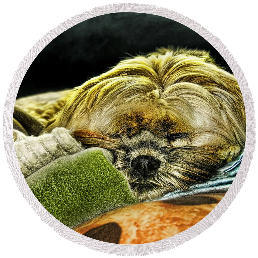 Dog Round Beach Towel featuring the photograph Nap Time by Adam Vance