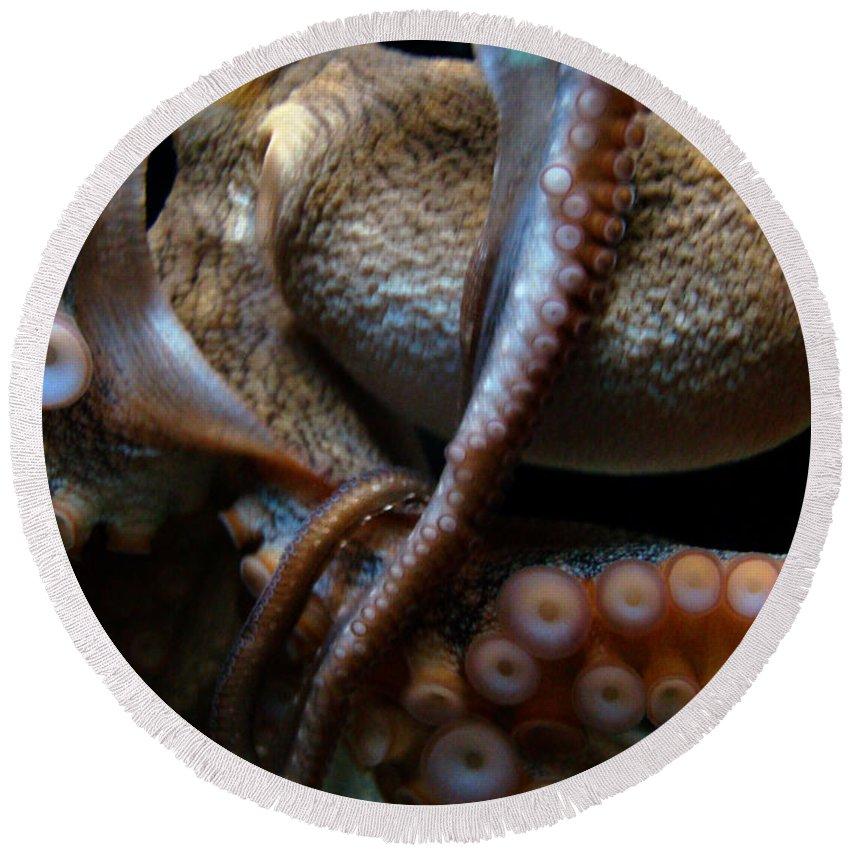 Waikiki Aquarium Round Beach Towel featuring the photograph Octopus 1 by Jennifer Bright