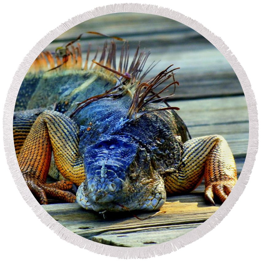 Reptiles Round Beach Towel featuring the photograph Old And Weary by Karen Wiles