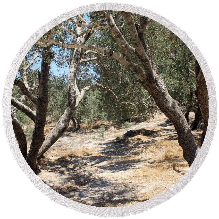 Olive Round Beach Towel featuring the photograph Olive Trees At Sebastia by Munir Alawi
