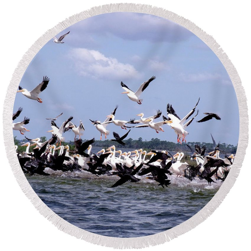 White Pelicans Round Beach Towel featuring the photograph On The Move by Marilyn Holkham