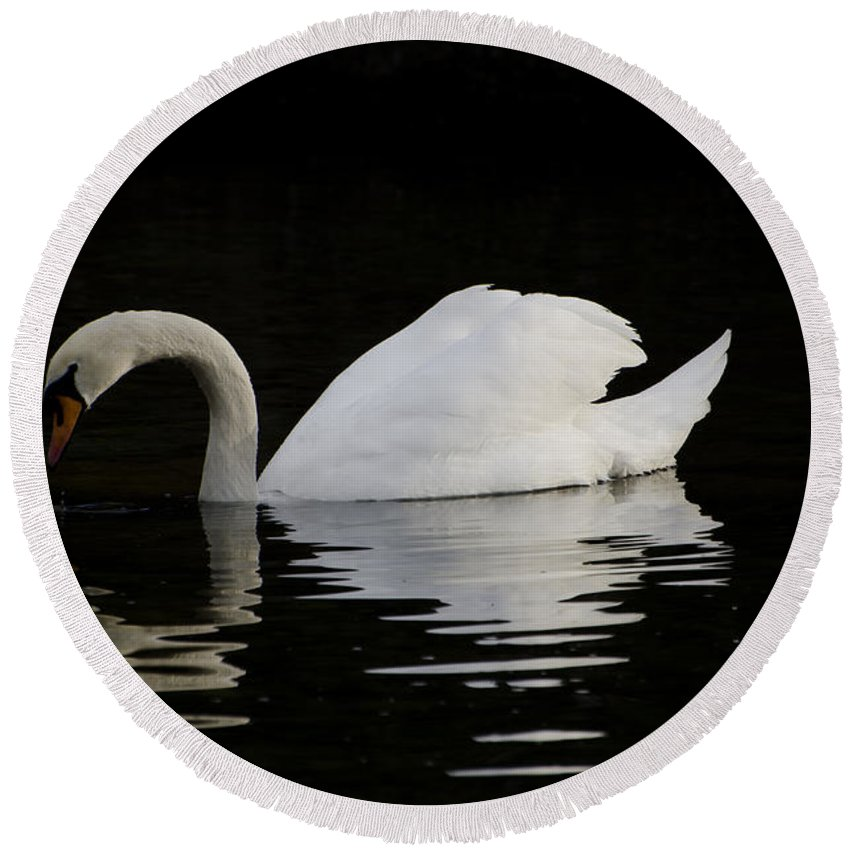 One Swans Round Beach Towel featuring the photograph One Swan by Mats Silvan