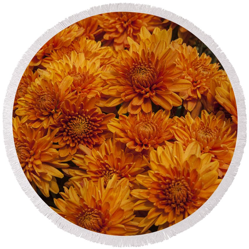 Mums Mum Round Beach Towel featuring the photograph Orange Mums by Darleen Stry