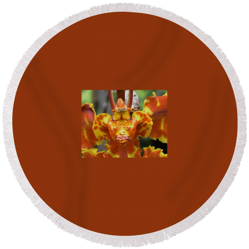 Orchid Round Beach Towel featuring the photograph Orange Orchid Clown by Wanda J King