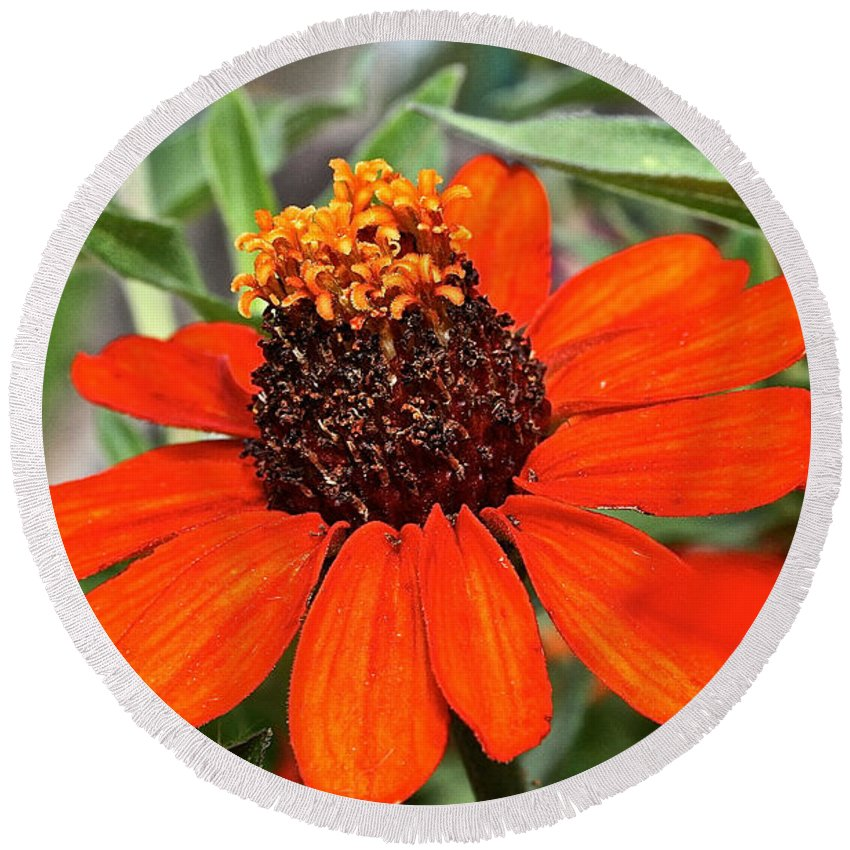Flower Round Beach Towel featuring the photograph Orange Petals by Susan Herber