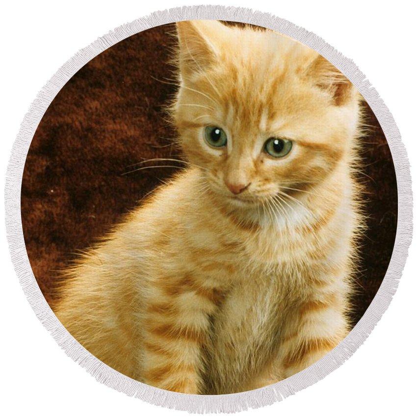 Kitten Round Beach Towel featuring the photograph Orange Tabby Mixed Breed Kitten by Larry Allan