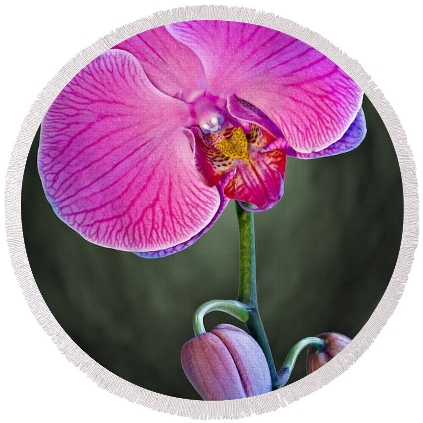 Orchid Round Beach Towel featuring the photograph Orchid And Buds by Susan Candelario