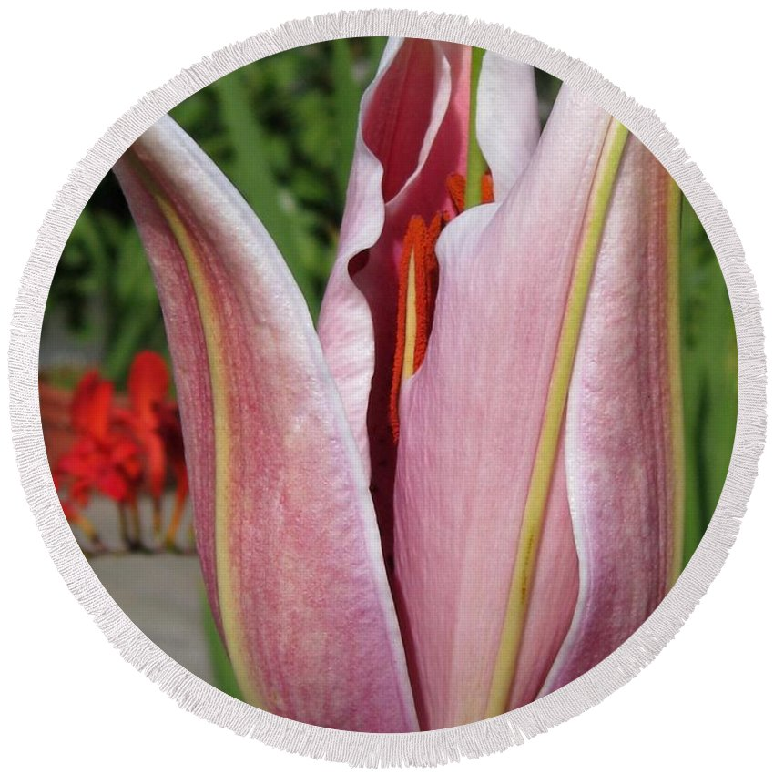 Oriental Lily Round Beach Towel featuring the photograph Oriental Lily Named La Mancha by J McCombie