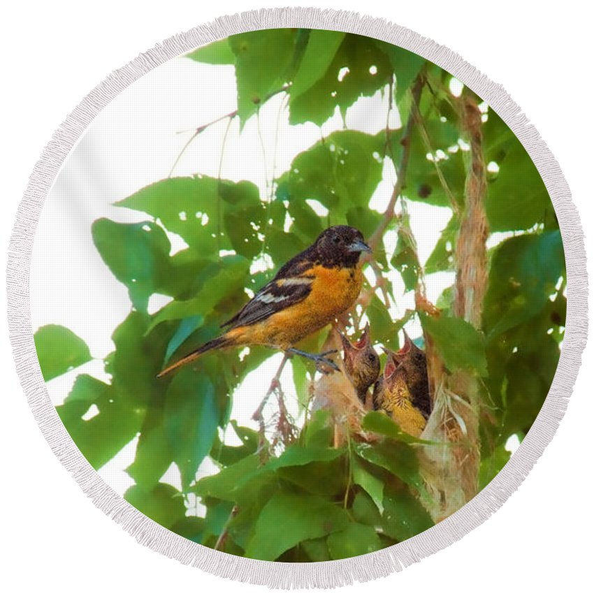 Orchard Oriole Round Beach Towel featuring the photograph Oriole And Babies by David Arment