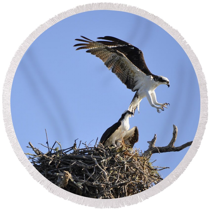 Osprey Round Beach Towel featuring the photograph Osprey Coming in for a Landing by Christine Stonebridge