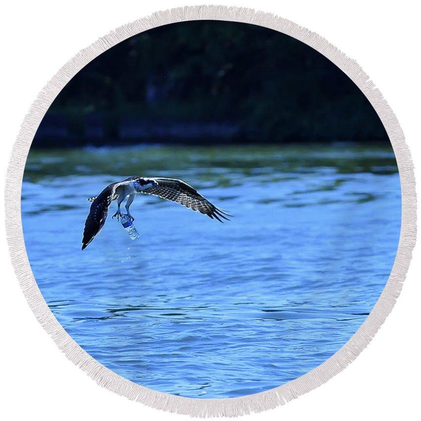 Osprey Carrying Bottle Round Beach Towel featuring the photograph Osprey Environmentalist by Randall Branham