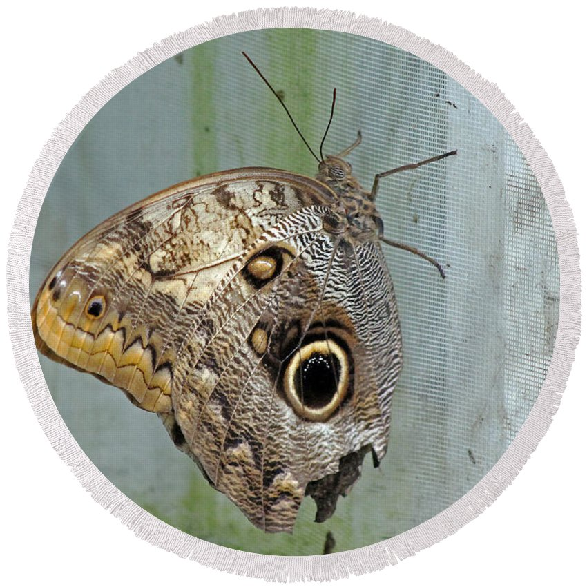 Butterfly Round Beach Towel featuring the photograph Owl Butterfly by Tony Murtagh