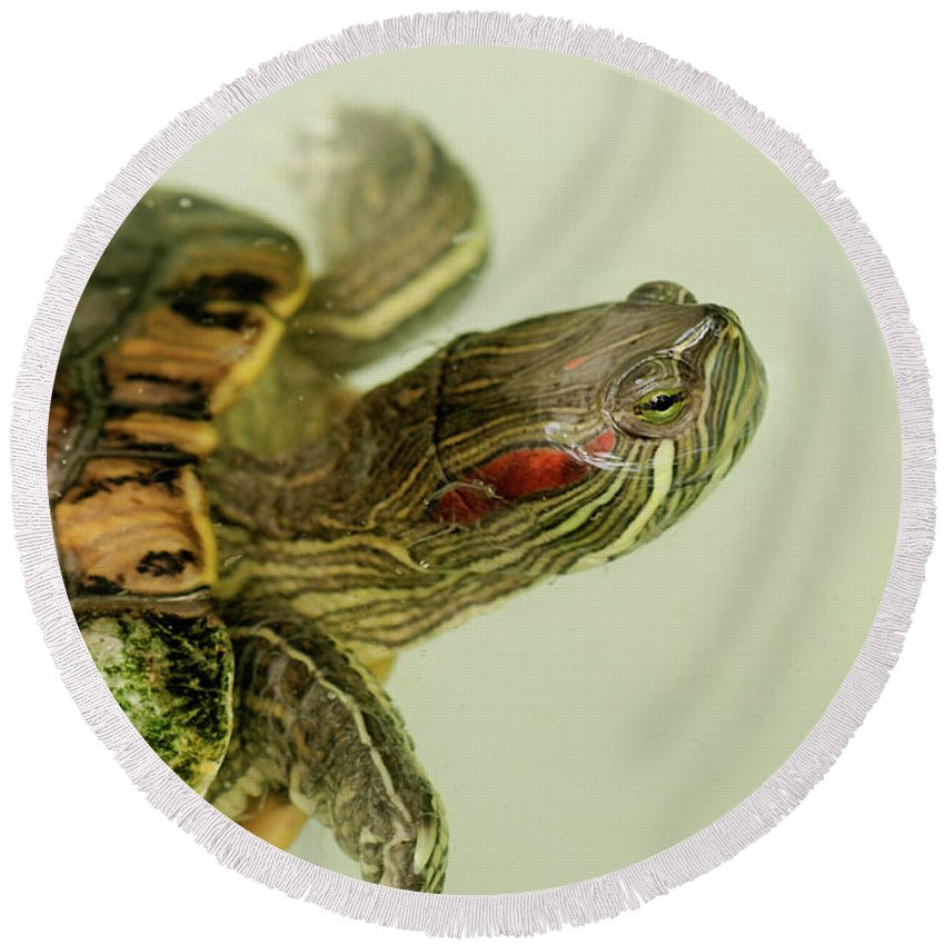 Abc Islands Round Beach Towel featuring the photograph Painted Turtle by Roderick Bley