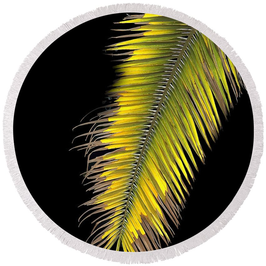Palm Round Beach Towel featuring the photograph Palm Frond Against Black by Mike Nellums