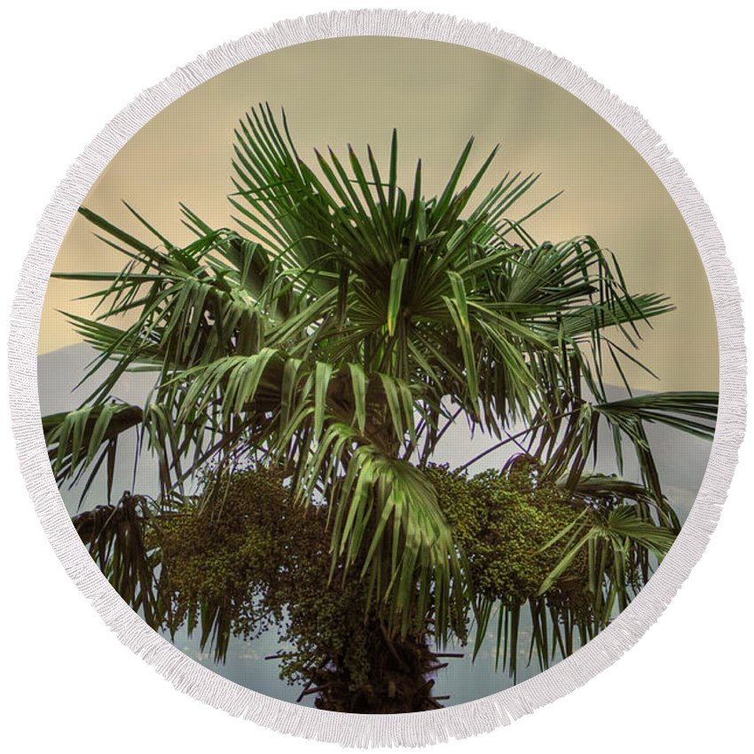 Palm Round Beach Towel featuring the photograph Palm Tree by Mats Silvan