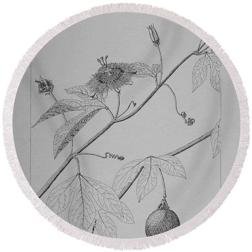 Passionflower Round Beach Towel featuring the drawing Passionflower Vine by Daniel Reed