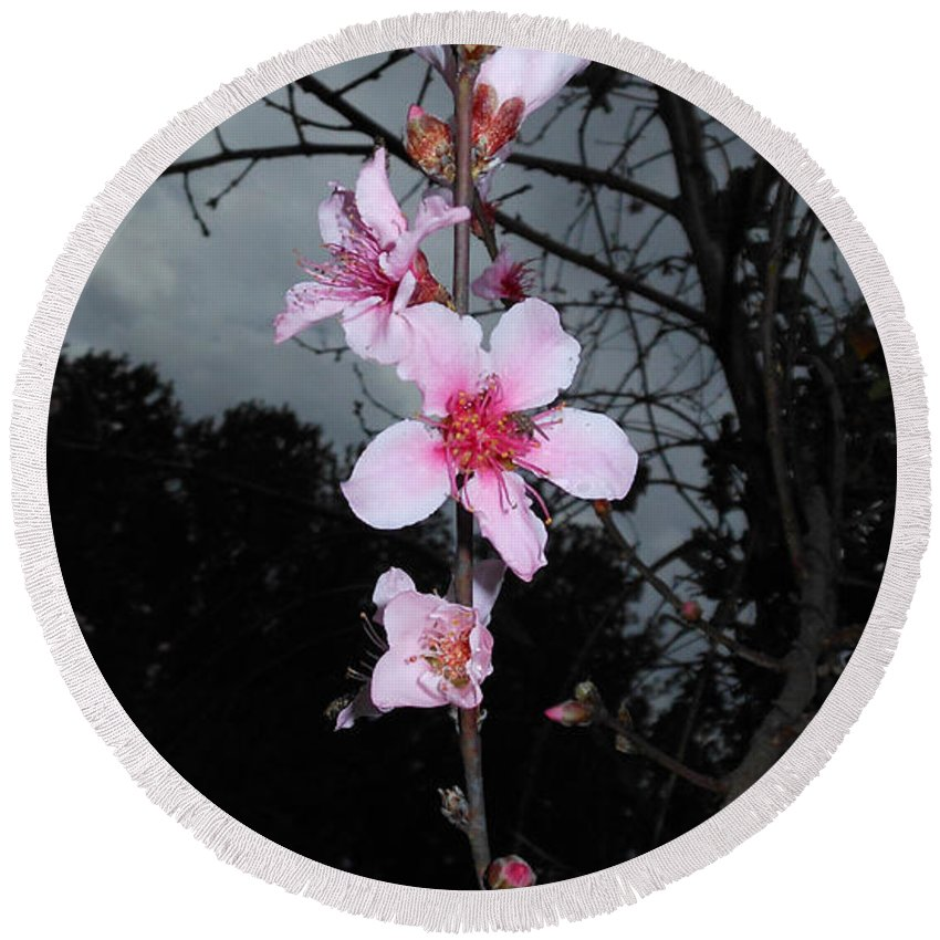 Peach Blooms Round Beach Towel featuring the photograph Peach Blooms by Donna Brown
