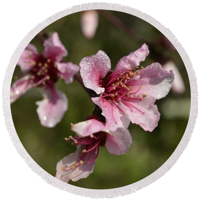 Flower Round Beach Towel featuring the photograph Peach Blossom Clusters by Donna Brown
