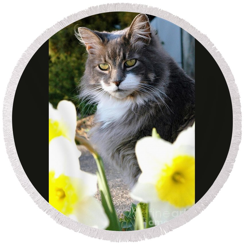 Cat Round Beach Towel featuring the photograph Peanut The Cat And Jonquils by Mike Nellums