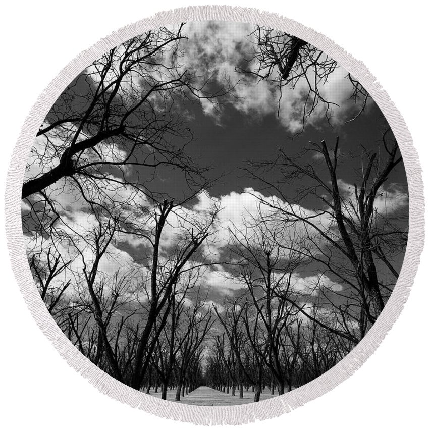 New Mexico Round Beach Towel featuring the photograph Pecan Trees by Sean Wray
