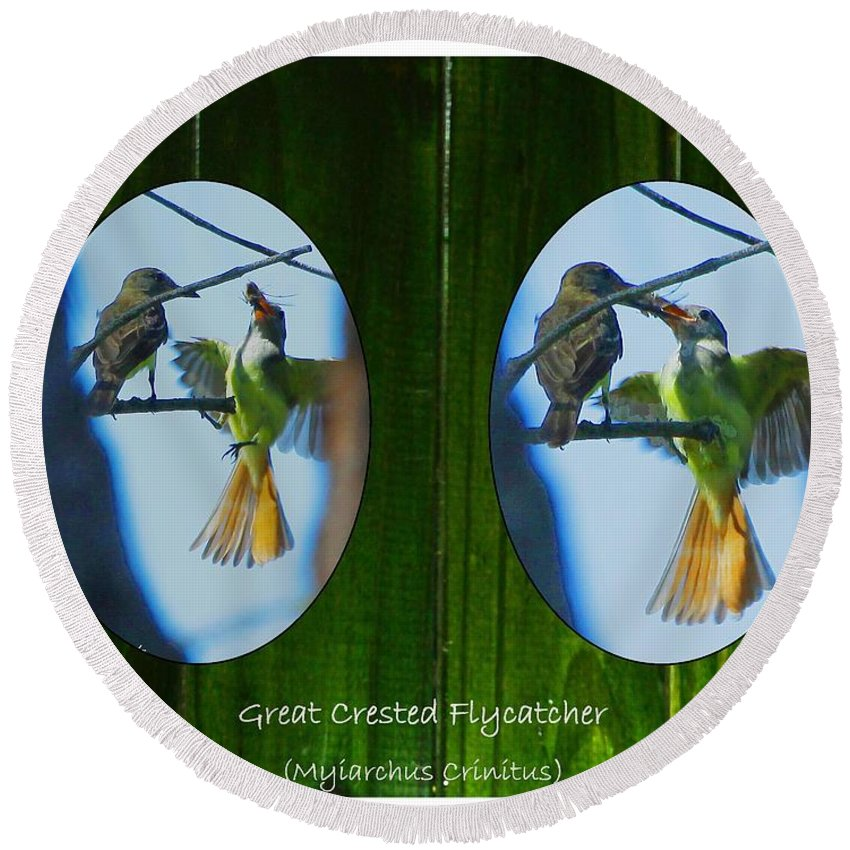 Great Crested Flycatcher Round Beach Towel featuring the digital art Peeking Through The Fence by Barbara Bowen