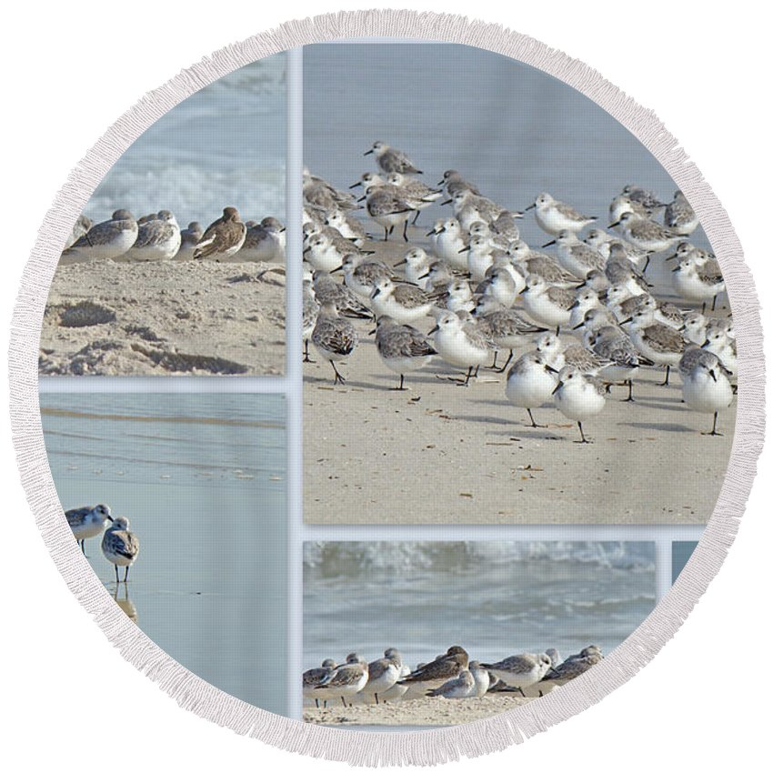 Birds Round Beach Towel featuring the photograph Peeps At The Beach by Mother Nature