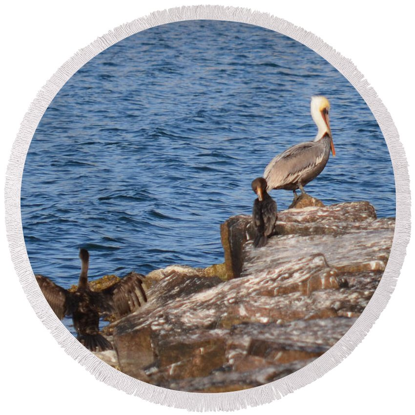 Birds Round Beach Towel featuring the photograph Pelican And Cormorants by Donna Brown