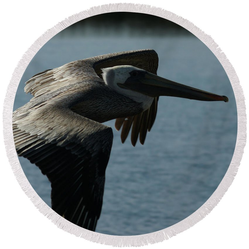 Brown Pelican Round Beach Towel featuring the photograph Pelican Fly By by Ernie Echols